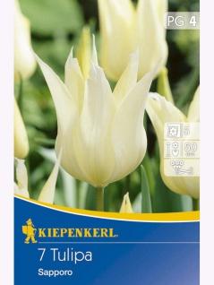 Tulipa Sapporo, 7 Stück Blumenzwiebeln , Grundpreis: 0.51 € pro 1
