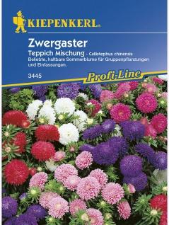 Callistephus Sommeraster Teppich Zwergaster-Mischung