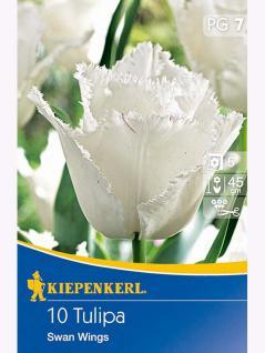 Gefranste Tulpen Swan Wings weiß