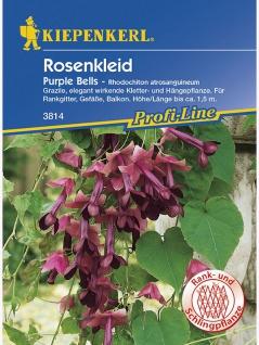 Rhodochiton sanquineum Schönkelch Purple Bells weinrot
