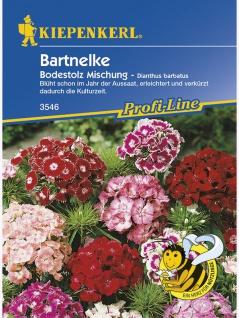 Dianthus barbatus Bartnelke Bodestolz Mischung