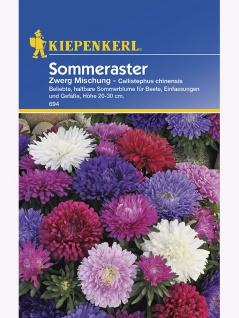 Callistephus Aster Zwerg-Aster Mischung - Vorschau 1