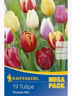 Mega-Pack Tulpen Triumph-Mix - Vorschau
