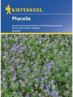 Phacelia Bienenweide Gründünger Portion , Grundpreis: 0.06 € pro 1 g