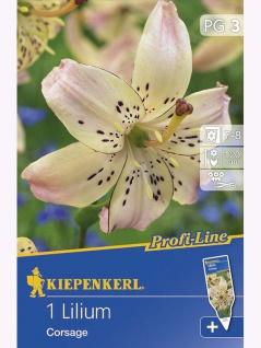 Lilien Corsage Tigerlilie
