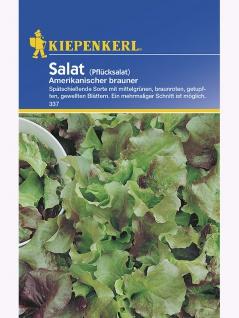 Salat Pflücksalat Amerikanischer Brauner Portion