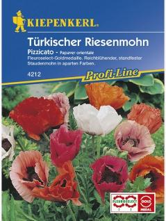 Papaver orientale Türkischer Riesenmohn Pizzicato niedrige Mischung - Vorschau 1