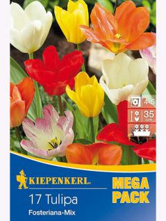 Mega- Pack Botanische Tulpen Kaisertulpen Mischung
