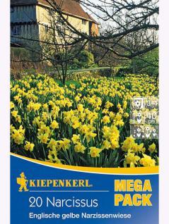 Mega- Pack Englische Narzissenwiese gelb
