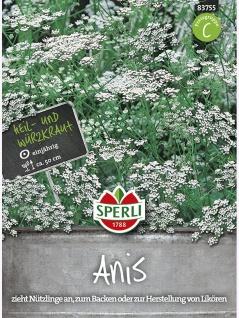 Anis Pimpinella anisum