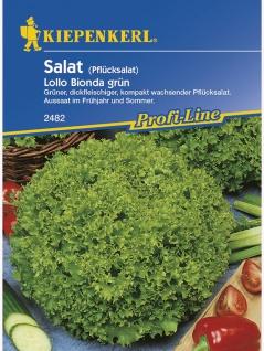 Salat Pflücksalat Lollo Bionda grün