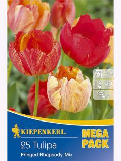 Mega- Pack Gefranste Tulpen Mischung Fringed Rhapsodie