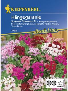 Pelargonium peltatum Hängegeranien Summer Showers Mischung