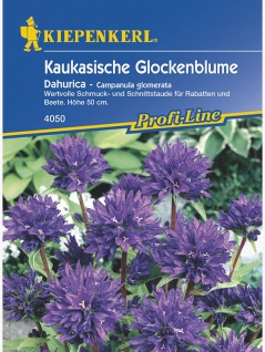 Campanula glomerata Kräuel-Glockenblume violettblau