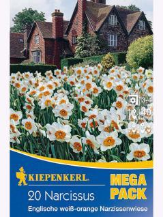 Mega- Pack Englische Narzissenwiese weiß/orange
