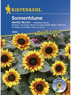 Helianthus Sonnenblumen Merida Bicolor