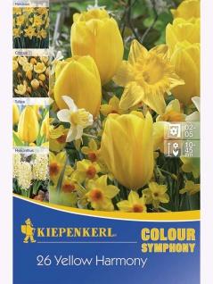 Colour Symphony Yellow Harmony