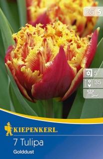 Tulipa Golddust, 7 Stück Blumenzwiebeln , Grundpreis: 0.57 € pro 1