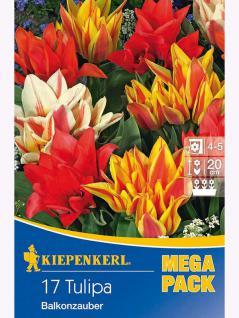 Mega- Pack Mehrblütige Tulpen Balkonzauber Mischung