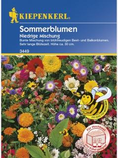 Niedrige Sommerblumenmischung