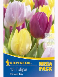Mega-Pack Einfache Frühe Tulpen Princenmischung