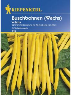 Buschbohnen Voletta Wachs