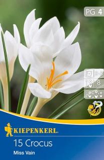 Crocus Miss Vain, 15 Stück Blumenzwiebeln , Grundpreis: 0.24 € pro 1