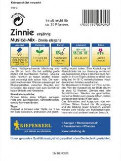 Zinnia elegans Zinnie Musica Mischung - Vorschau 2