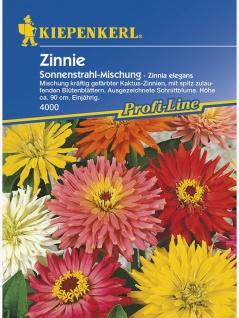 Zinnia elegans Gefranste Zinnie Sonnenstrahl-Mischung
