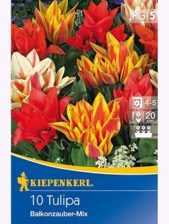 Mehrblütige Tulpen Balkonzauber Mischung mehrblütig früh