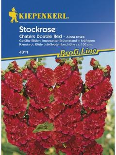 Alcea rosea Stockrosen Stockmalve Chaters Double Red