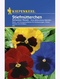 Viola Stiefmütterchen Schweizer Riesen Mischung - Vorschau 1