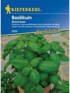 Basilikum Genoveser, großblättrige einjährige Sorte entwickelt viel Blattmasse, ist sehr intensiv im Geschmack