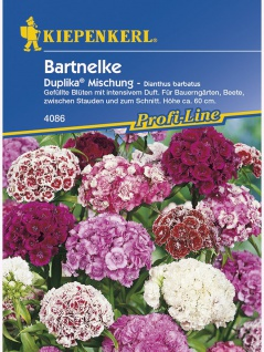 Dianthus barbatus Bartnelke Duplika gefüllt blühende Mischung