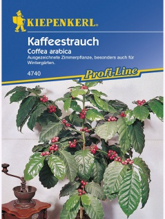 Coffea arabica Kaffeestrauch