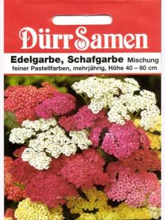 Edelgarbe Schafgarbe Mischung Achillea millefolium