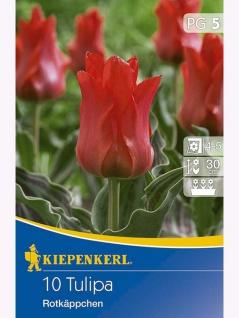 Tulpen Rotkäppchen