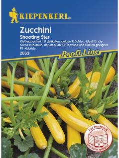 Zucchini Shooting Star - Vorschau 1