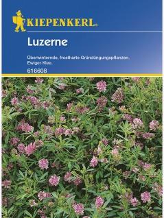 Luzerne Gründünger Portion , Grundpreis: 0.06 € pro 1 g