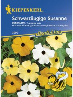 Thunbergia alata Schwarzäugige Susanne Mischung