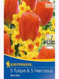 Blühende Partner Sun-Duo Tulpe Orange Emperor + Narzisse Falconet