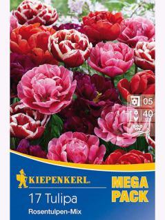 Mega- Pack Gefüllte Tulpen Rosentulpen-Mischung