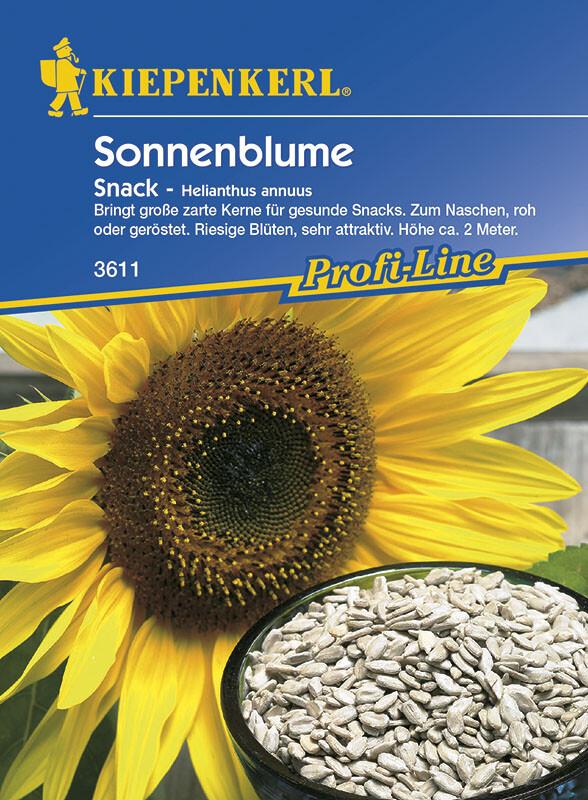 Helianthus annuus Sonnenblume King Kong gelb riesenwüchsig