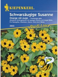Thunbergia alata Schwarzäugige Susanne Susi orange mit Auge