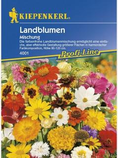 Landblumenmischung einjährige Mischung Mega-Pack
