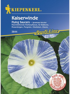 Ipomoea tricolor Kaiserwinde Tricolor Flying Saucers