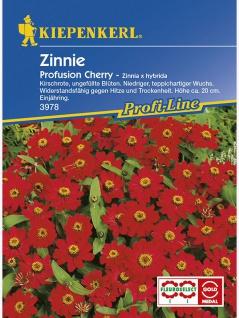 Zinnia elegans Zinnie Profusion Cherry