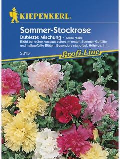 Alcea rosea Stockrosen Dublette Mischung - Vorschau 1