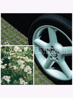 DSV-Rasensamen 5.1.1 Parkplatzrasen mit 2% Achillea 10kg , Grundpreis: 10.75 € pro 1 kg