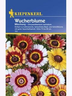 Chrysanthemum carinatum Wucherblume Mischung